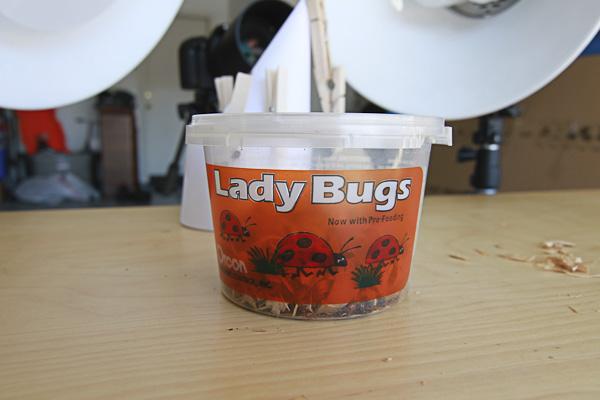 bugs-3